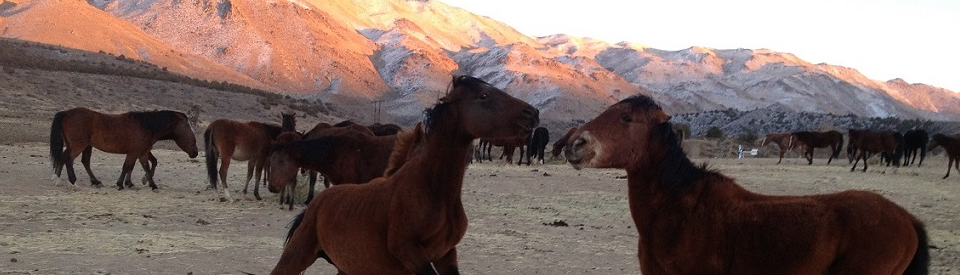 Help Save the American Wild Horses